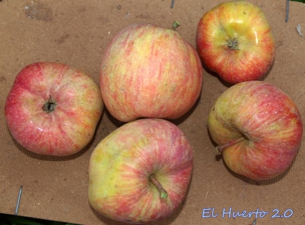 Manzanas Fuji