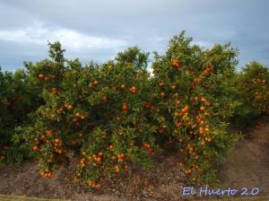 Cargados de fruta