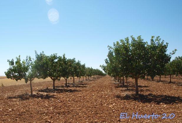 Plantación en Toro