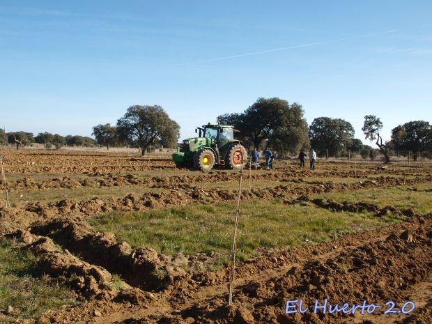 Plantando pistachos