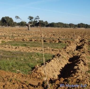Zanja de plantación
