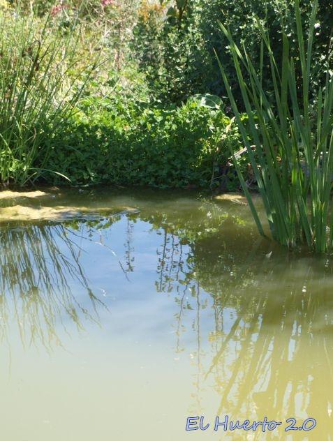 Desde el estanque