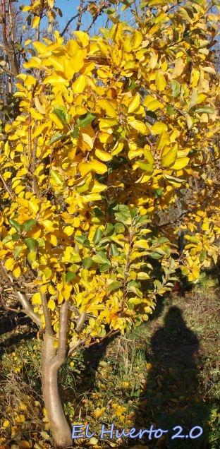 Con el color del otoño