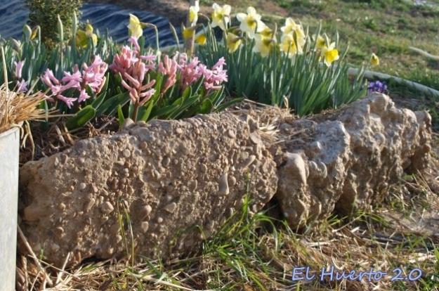 Rocalla florida
