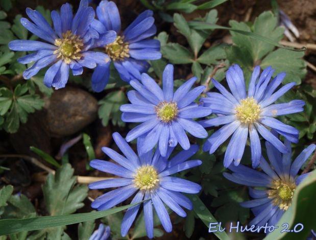 ... de luminoso azul