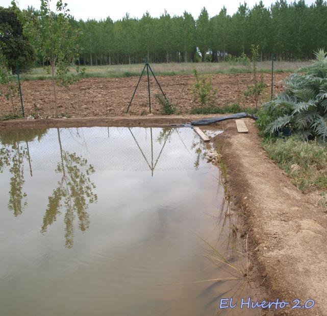 Carpas koi en el estanque el huerto 2 0 for Carpas estanque