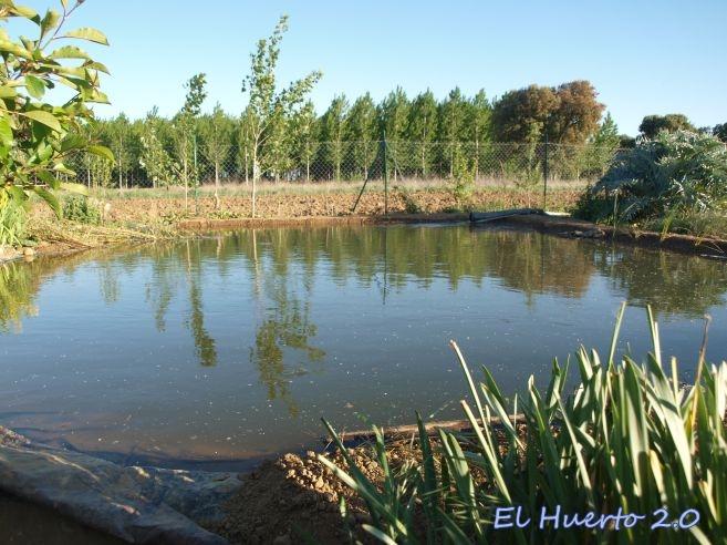 Renovaci n del estanque iv remates finales el huerto 2 0 for Estanque de truchas