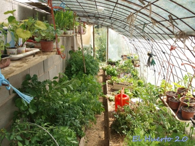 Interior del invernadero