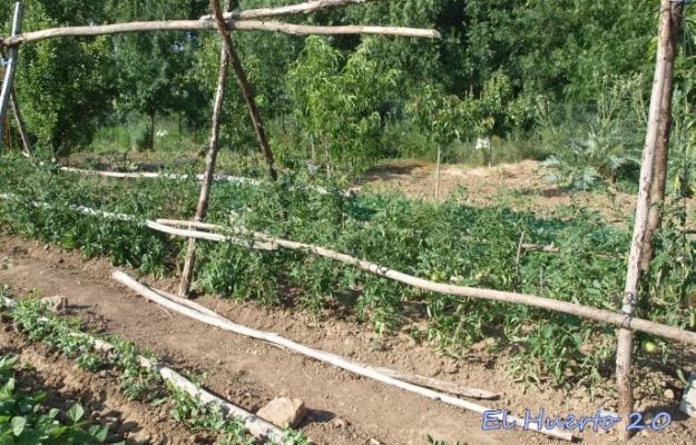 Estructura alta para tomates de tallo alto