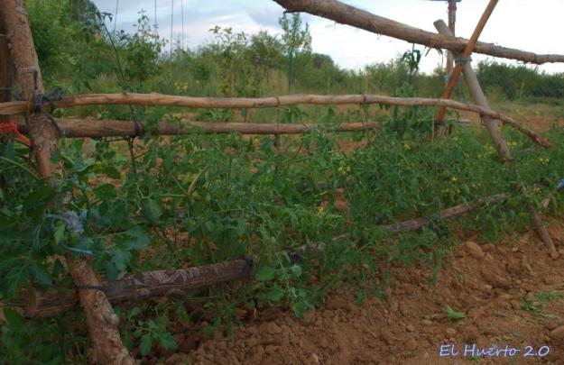 Barracapara los tomates de tallo más corto