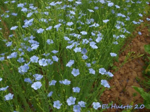 Abundante floración