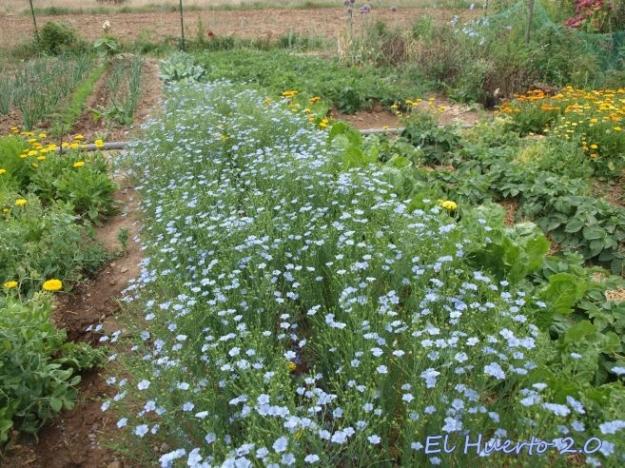 La floración posterior es menos abundante