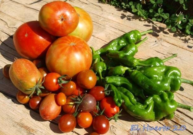 Tomates y pimientos para casa