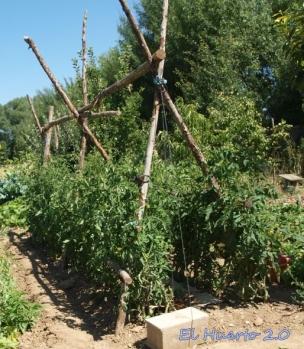 Hileras de tomates