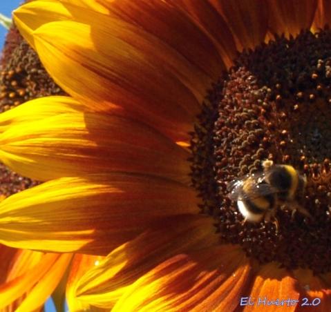 Con ls patas en el polen