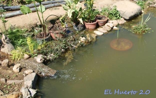 Calas, Iris y otras acuáticas en los márgenes
