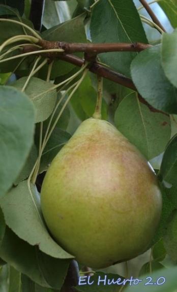 Fruta en general bien saneada