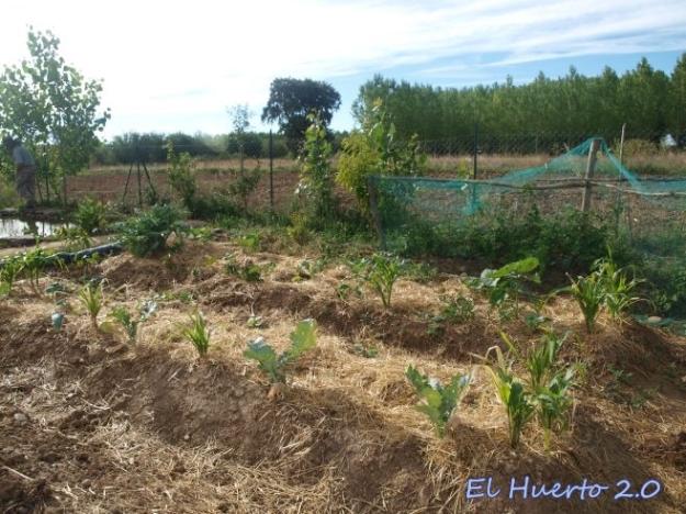Plantando y acolchando en julio