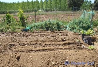 Regando en junio antes de plantar