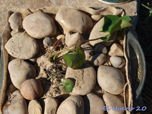 Tapando con arena y piedras la tierra