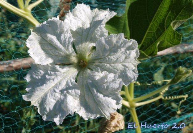 Bella y delicada flor blanca