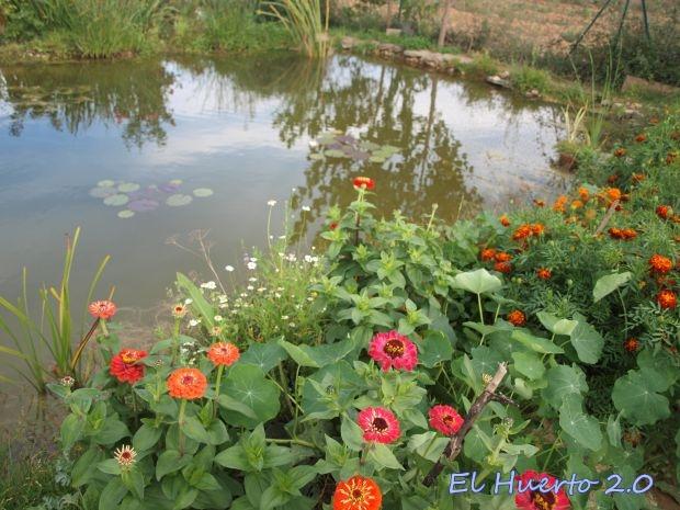 Flora alrededor del estanque