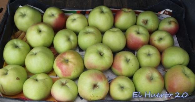 Caja  de manzanas de variedad  desconocida