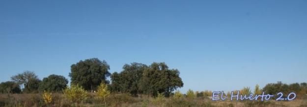 Vista desde el huerto