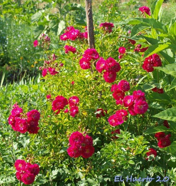LLeno de flor