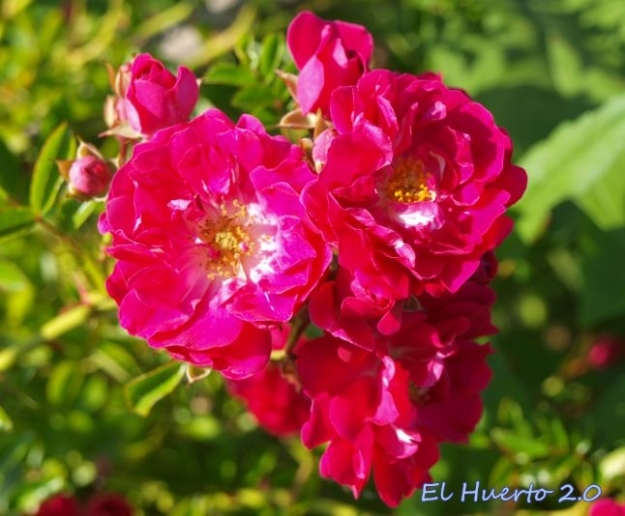 Flores en color fucsia