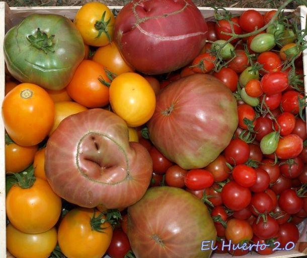 Tomates  de la cosecha 2014