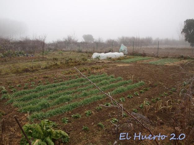 Vista del huerto 2.5