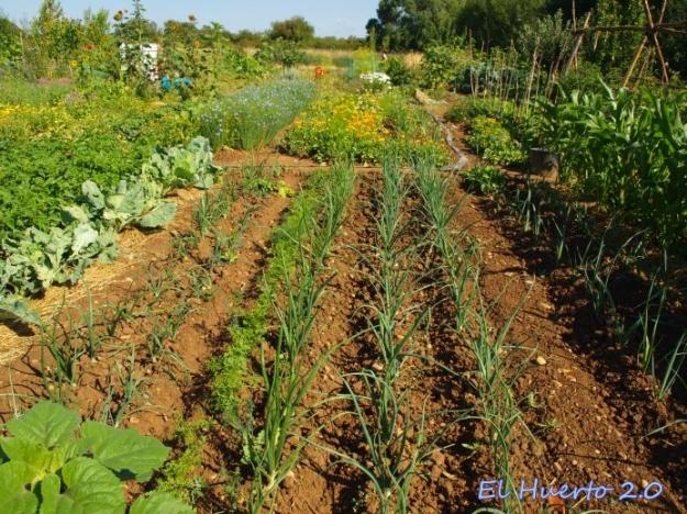 Disposición de cultivos al inicio de verano