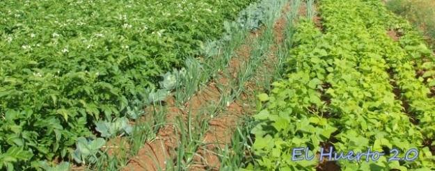 Diferentes cultivos