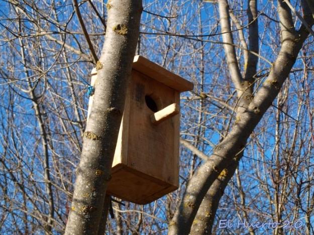 Caja nido, modelo buzón en lo alto de los fresnos
