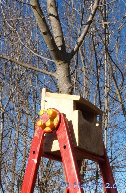 En lo alto de la escalera para sujetarla en el cruce de las ramas