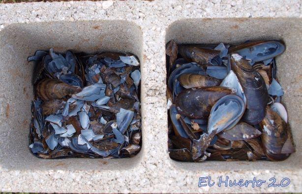 Machacando las conchas