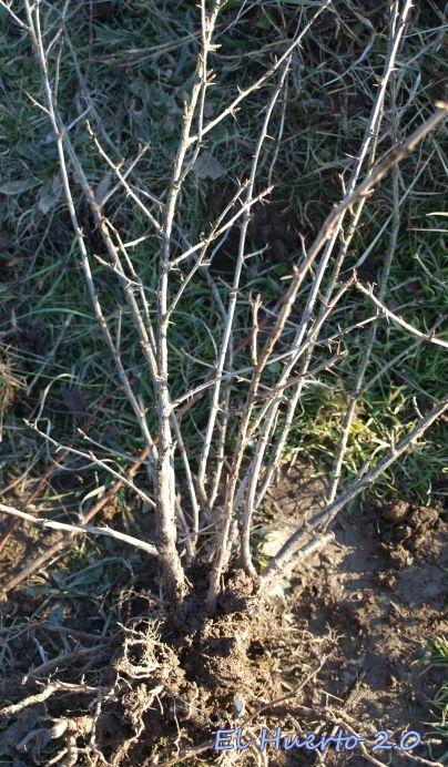 Planta limpia de grama y lista para el trasplante