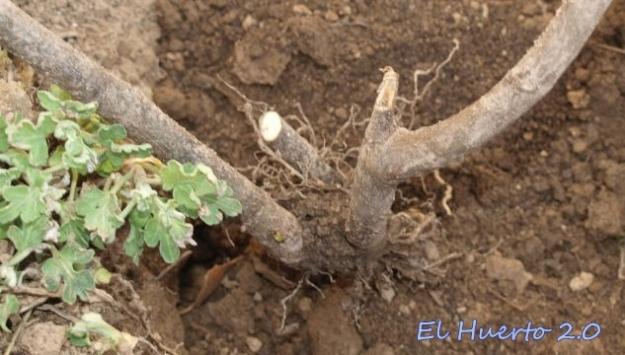 Con buenas raíces