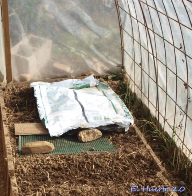 Siembra directa en el suelo del invernadero