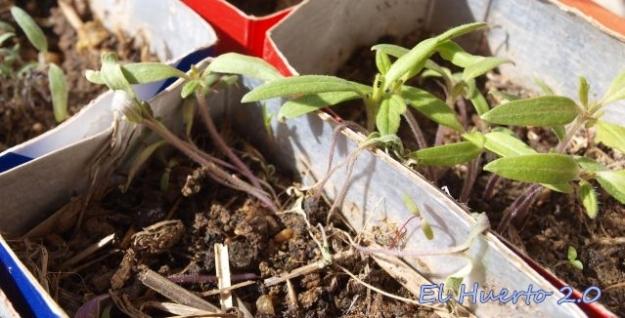 Problemas en el cuello de las plantas
