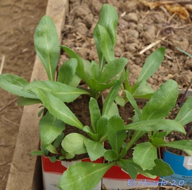 Plantas creciendo