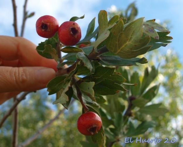 Algunos frutos en el otoño de 2014
