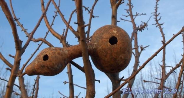 Encajada entre los troncos