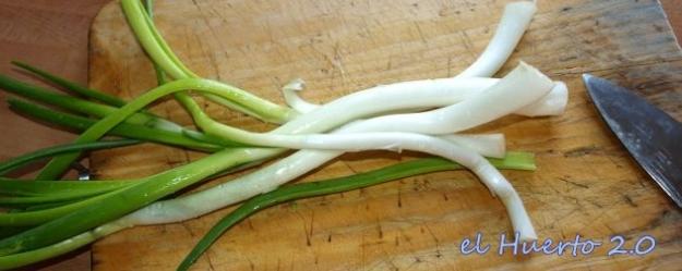 Tallos de cebolla antes de cortarlos finamente