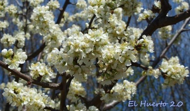 Densidad de la floración en algunos casos