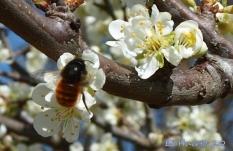 Flores e insectos