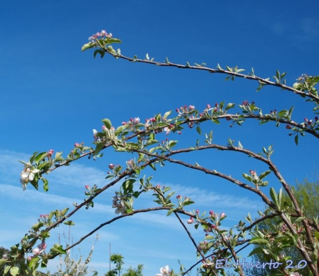 Abundancia de flor en las ramas dobladas