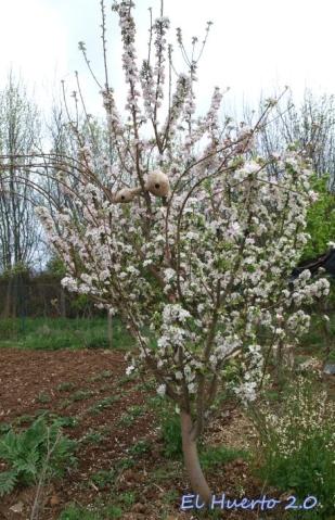 La Verde Doncella ha tenido una floración espectacular