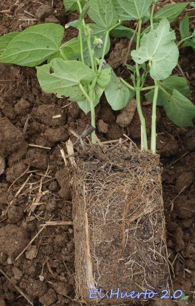 Tierra y raíces